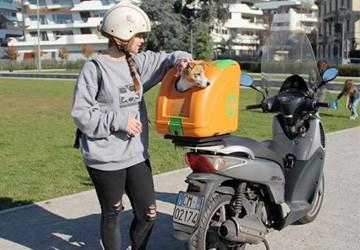 Animali un trasportino brevettato per portare il cane in for Puntura vespa cane